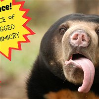 Pull A Face! The Science Of Four-Legged Facial Mimicry (encore)