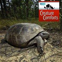 Creature Comforts | Raising Gopher Tortoises