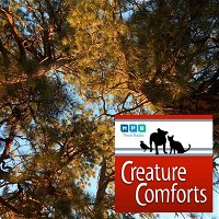 Creature Comforts | Autumn Sightings