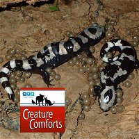 Creature Comforts | The Bucket Brigade