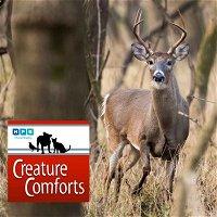 Creature Comforts | Autumn Deer