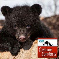 Creature Comforts | Black Bear Black Bear