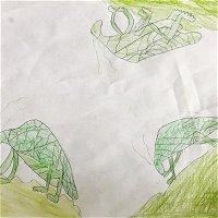 2.3 Lovely Leaf Bugs