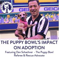Fluff vs. Ruff - The Puppy Bowl's Impact on Adoption - A Conversation with Dan Scachner the Puppy Bowl Ref