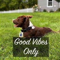 Episode 2: Puppy Socialization