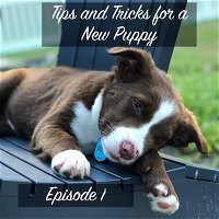 Episode 1: Tips and Tricks for a New Puppy