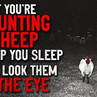 """If you're counting sheep to help you sleep, don't look them in the eye"" Creepypasta"
