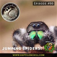 Jumper Spiders with Stevie - 90 Reptile n Chill