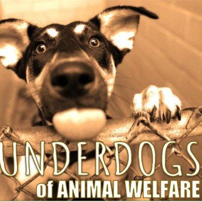 The Underdogs of Animal Welfare