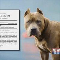 [Ep88] Dog Dementia Answers, Allergy Remedies that WORK, Breed Specific Legislation