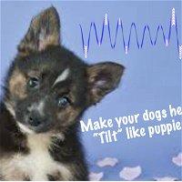 Episode 11: Make your Dog Tilt Their Head