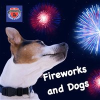 Episode 5: Dogs and Fireworks- Strategies for Dog Owners!