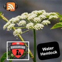 Episode 8: Water Hemlock - Poison