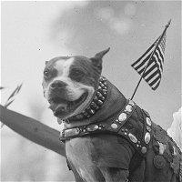 0133: Stubby the War Dog