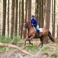 Conditioning the Older Trail Horse