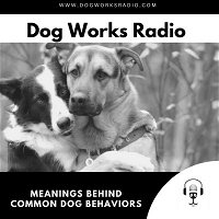 MeaningsBehind Common DogBehaviors