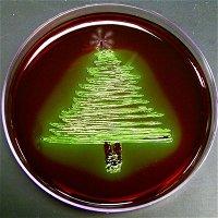 60 - Santa's Salmonella