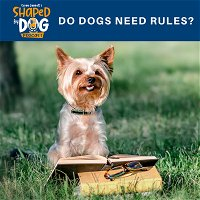 Do Dogs Need Rules?