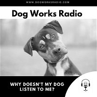 Why doesn't my dog listen to me?