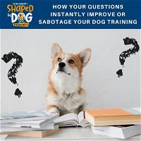 How Your Questions Instantly Improve or Sabotage Your Dog Training