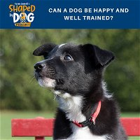Can a Dog be Happy and Well Trained?