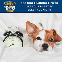 Pro Dog Training Tips to Get Your Puppy to Sleep All Night