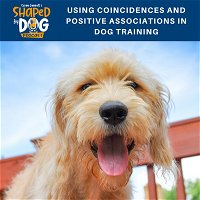 Using Coincidences and Positive Associations in Dog Training