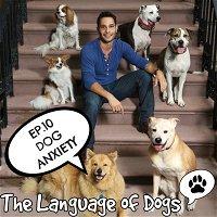 """EP. 010 """"Dog Anxiety"""""""