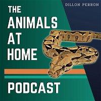 68: Nidovirus, The Ball Python Epidemic | Elijah Snyder