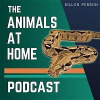 69: Keeping 170+ Reptiles Properly | Francis Cosquieri