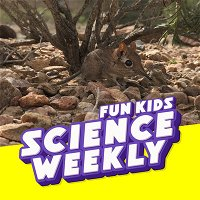 The Lost Species of the Elephant Shrew &  Dr. Jess French!