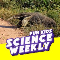 The Danger Of Anteaters & Are Computers Capable Of Sarcasm?